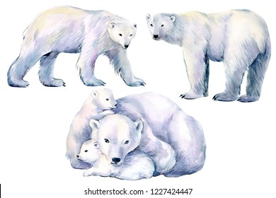set of polar bear, winter animals on an isolated white background, watercolor illustration