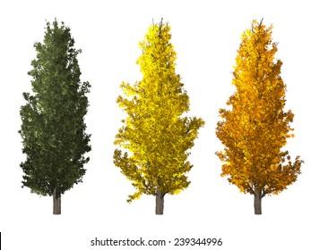 set of populus nigra tree isolated on white background