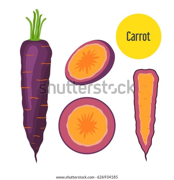 Set of purple carrot. Healthy garden nutrition, organic ripe carrot for restaurant, market. Flat style.
