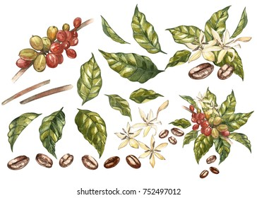 Set of Red coffee arabica beans on branch with flowers isolated, watercolor illustration