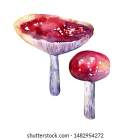 Set of Red fly agaric in watercolor isolated on white background. Forest mushrooms. Autumn forest. Realistic style. Watercolor Bohemian forest, isolated poster Amanita illustration, fly agaric.