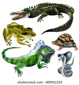 Set of reptiles animals. Watercolor illustration in white background.