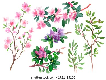 A set. Rhododendron flowers and branches. The first spring flowers. Watercolour. The images are hand-drawn and isolated on a white background.