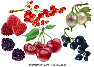Set of ripe raspberries, red currant, black currant berries, cherries, blackberry, gooseberry on a white background, hand drawn watercolor illustration.