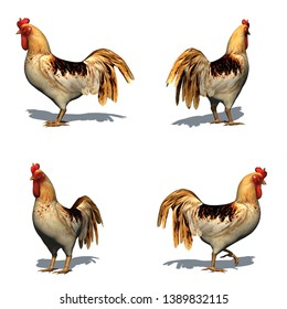 Set of rooster with shadow on the floor - isolated on white background - 3D illustration