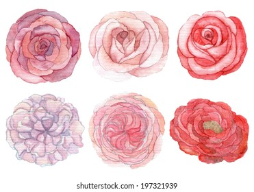 Set of roses and peonies traditional drawing and painting by water-color on white background
