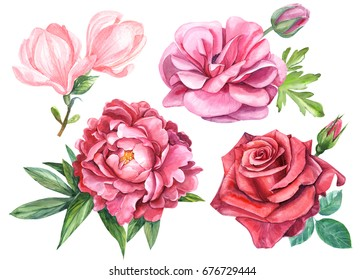set of roses, peony, magnolia, ranunculus, watercolor, hand drawing