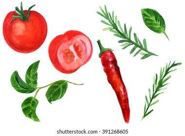 A set of rustic style watercolor drawings of a tomato, basil leaves, rosemary twigs, and a red hot chili pepper, hand painted on white background
