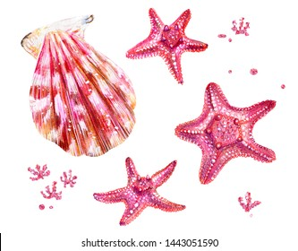Set of sea shells of scallops and sea stars. Pink and mother of pearl clam Pectinidae and algae. Nature of the World Ocean. Underwater resident. Summer season. Hand drawn illustration.