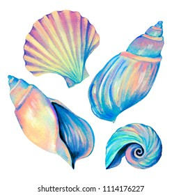 set of seashells - conch, fan shell, and cockle-shell. Amazing iridescent colors, detailed hyper - realistic illustration, blue opalescent glow. Mother of pearl shells.