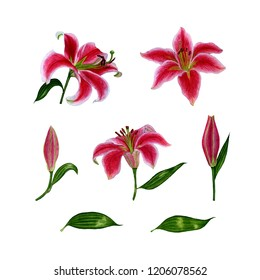 Set of separate elements from lily flowers. Watercolor. Hand drawn illustration. Design elements on a white background for the design of cards, wedding invitations, greetings, etc.