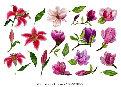 Set of separate elements from lily and magnolia flowers. Watercolour flowers illustration hand painted. Design elements on a white background for the design of cards, wedding invitations, greetings.