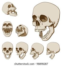 Set of Seven Drawings of Human Skull. Rasterized Version