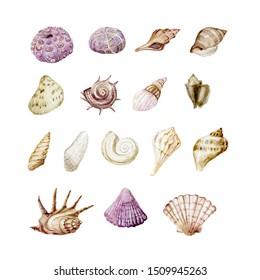 Set of shells. Watercolor graphic. Underwater world.