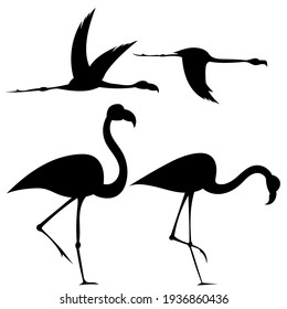 Set of silhouettes of flamingos drawing on a white background