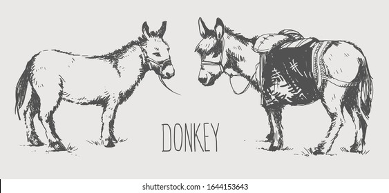 Set of sketches of donkeys. mules. burro in graphic style, from hand drawing image.