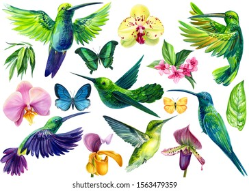 set of small birds, hummingbirds, butterflies, flowers of orchids, tropical leaves on a white background, watercolor hand drawing