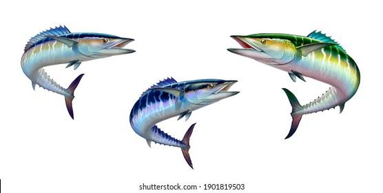 Set spanish Mackerel wahoo dark blue fish big fish on white realistic illustration isolate. Oceanic big mackerel green predatory fish with open mouth.
