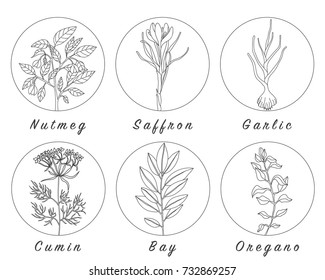 Set of spices, herbs and officinale plants icons. Healing plants. Medicinal plants, herbs, spices hand drawn illustrations. Botanic sketches icons.