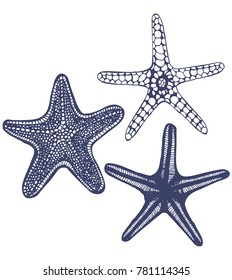 Set of Starfishes. Collection of Sea Design Elements in Hand Drawn Graphic Style. Illustration