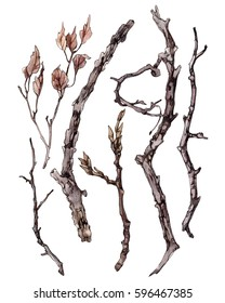 Set of sticks and twigs with leaves, illustration painted in watercolor and pencils.