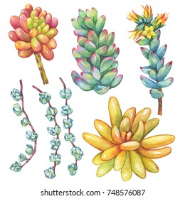 Set. Succulents collection. Watercolor hand drawn painting illustration isolated on white background.