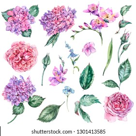 Set of Summer Watercolor Flowers Hydrangea, Freesia, Roses, Garden Flowers, Leaves and Buds Watercolor Botanical Floral Natural Collection Isolated on White Background