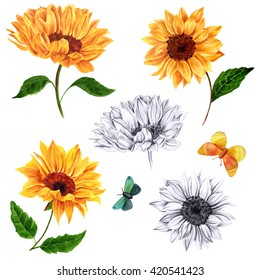 A set of sunflowers and butterflies, hand painted in watercolors and pencil on white background