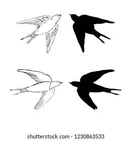 set of the swallow icons. Design elements for poster, illustration.