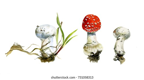 The set of three autumn forest mushrooms, agaric and raincoats, watercolor painting