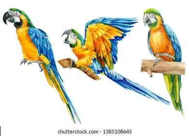 set of three parrots Ara, tropical birds on an isolated white background, watercolor illustration, hand drawing