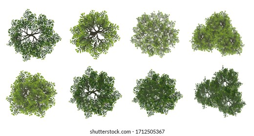 Set of tree top view for landscape plan and architecture layout plan