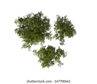 Set of Tree, View from the Above, Isolated on White Background