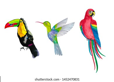 Set of tropical bird. toucan, parrot, hummingbird. watercolor illustration