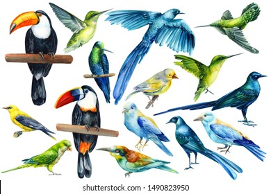 set of tropical birds on an isolated white background, watercolor illustration. Glossy Long-tailed Starling, Hummingbird, Toucan, Parrot, Oriole, Kingfisher, Bluefin