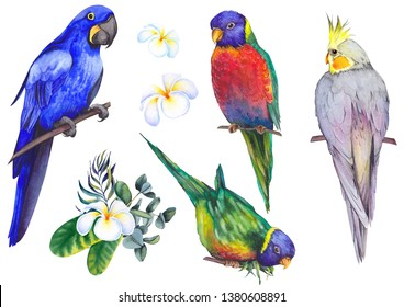 Set of tropical birds. Parrots, maccaw and cockatiel. Watercolor illustration on white background. Isolated elements for design.