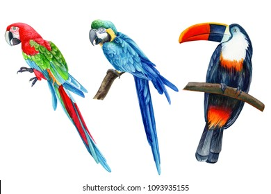 set of tropical birds, parrots and toucan on isolated white background, watercolor illustration, hand drawing