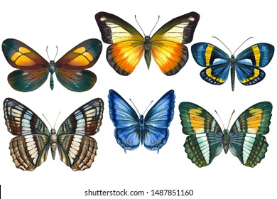 Set of tropical butterflys on an isolated white background, watercolor illustration, hand drawing, painting