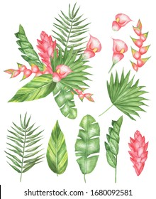 Set of tropical flowers and leaves. Create your own composition. Isolated elements on a white background. Watercolor hand drawing.