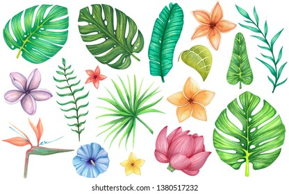 set with tropical flowers and leaves. Watercolor illustration isolated