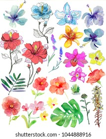 Set of tropical flowers. Watercolor illustration.