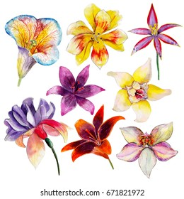 The set of tropical flowers, watercolor illustration, isolated objects on white background.