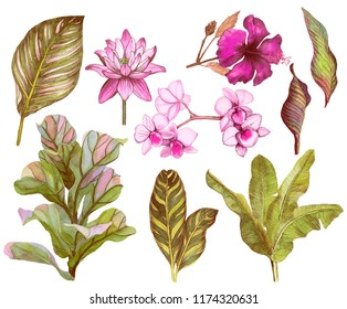 Set of tropical leaves and flowers. Orchid, banana leaves, water lily, ficus, hibiscus isolated on white background. Stock  Watercolor illustration.