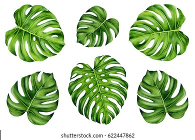 Set of tropical leaves. Green monstera leaf. Symmetrical composition. Hand painted watercolor illustration. Realistic botanical art.