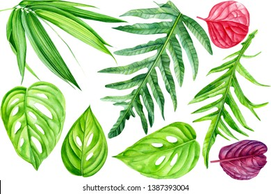 set of tropical leaves on an isolated white background, watercolor illustration, hand drawing,  philodendron, Monstera, bamboo, pink plants, floral pattern