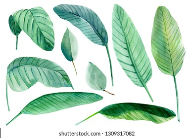 set of tropical leaves on a white background, palm leaves, watercolor illustration