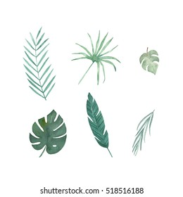 Set of  tropical leaves. Watercolor isolated elements