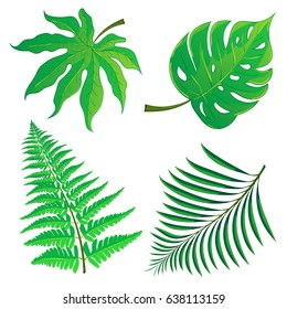 Set of tropical palm leaves isolated on white background. Hand drawn illustration in cartoon style. Can be used for design your website or print publications and other.