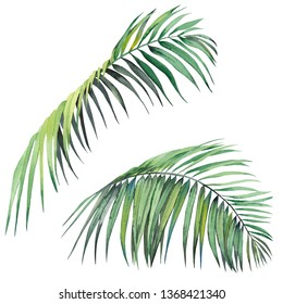 Set of tropical palm leaves. Watercolor on white background. Isolated elements for design.