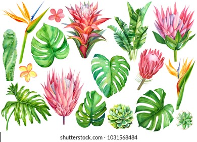 set of tropical plants and flowers on white background, watercolor hand drawing,  leaves of palms, monstera, succulent, cactus, protea, strelitzia, plumeria, guzmania